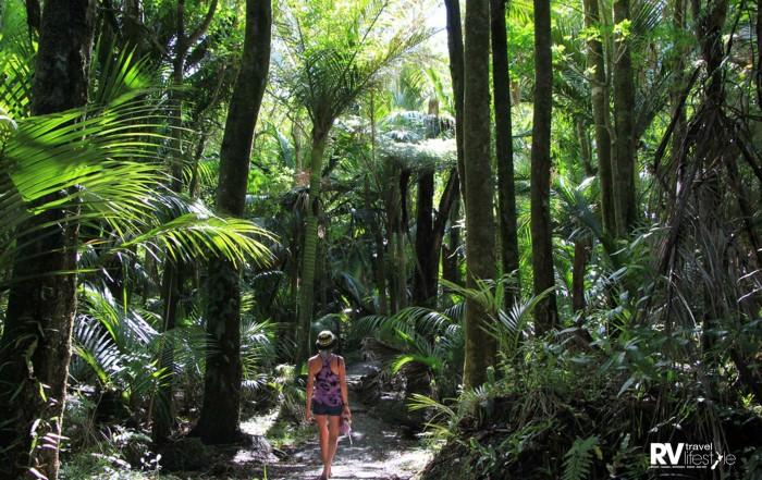 Peacefulness of the Nikau Loop bush track