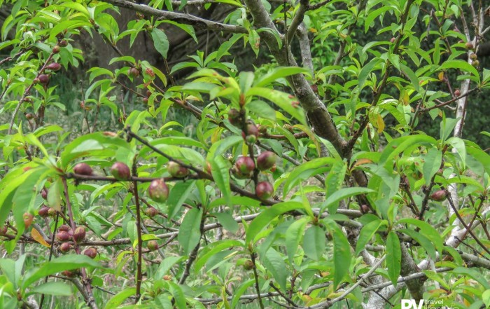 It's looking like a good year for nectarines