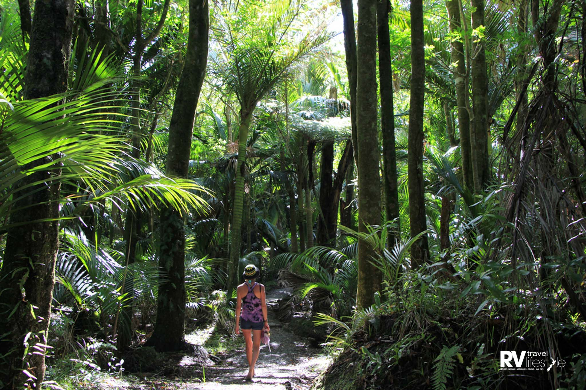 Peacefulness of the Nikau Loop bush track