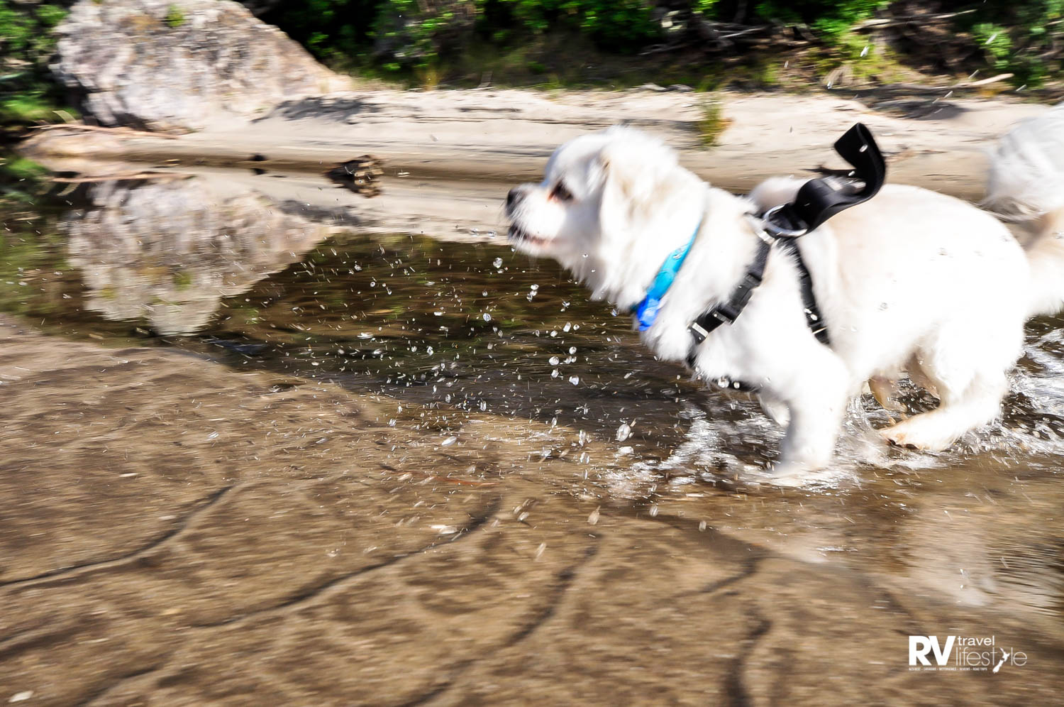 I had a great time running around at the beach