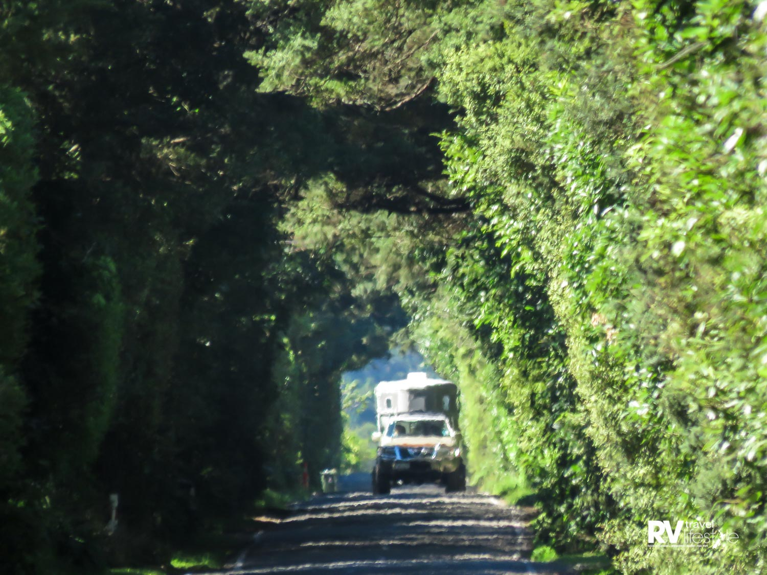 This leafy tunnel leads travellers towards Otaki Gorge