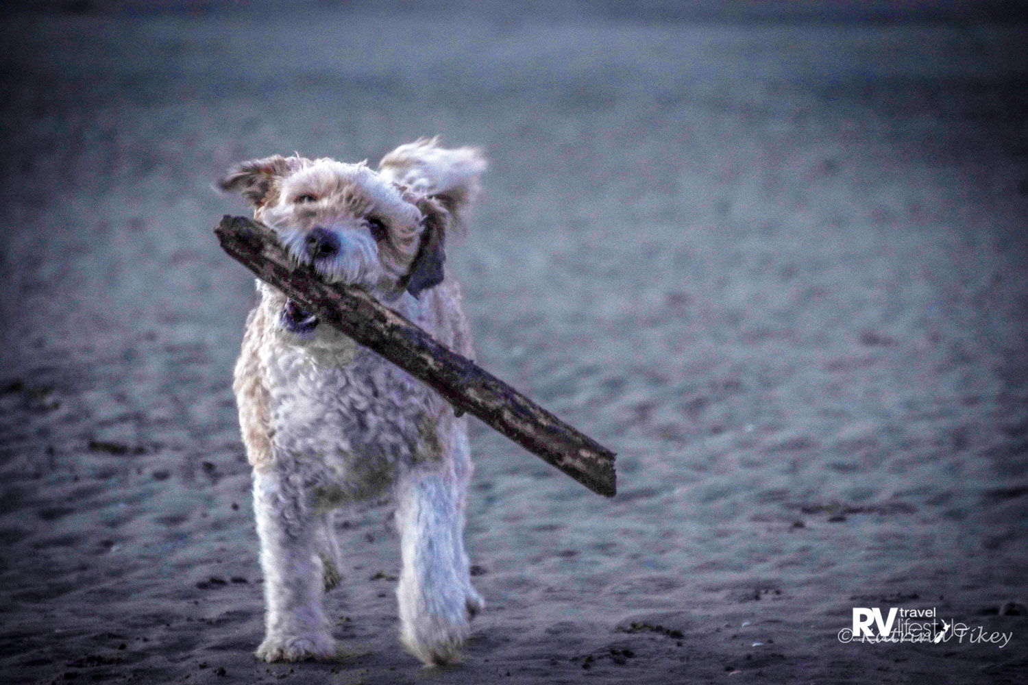 Lots of time to chase sticks on the beach