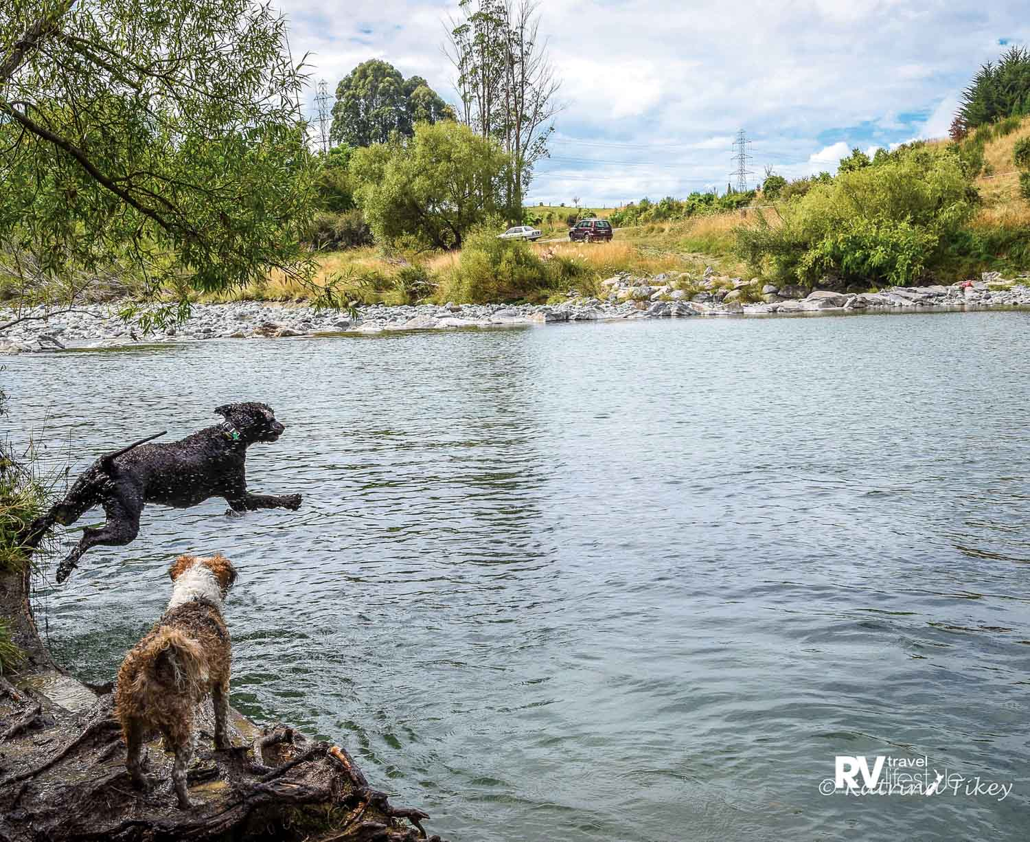 Life on the road means new swimming holes to try out. And time for Paddy to practise his diving