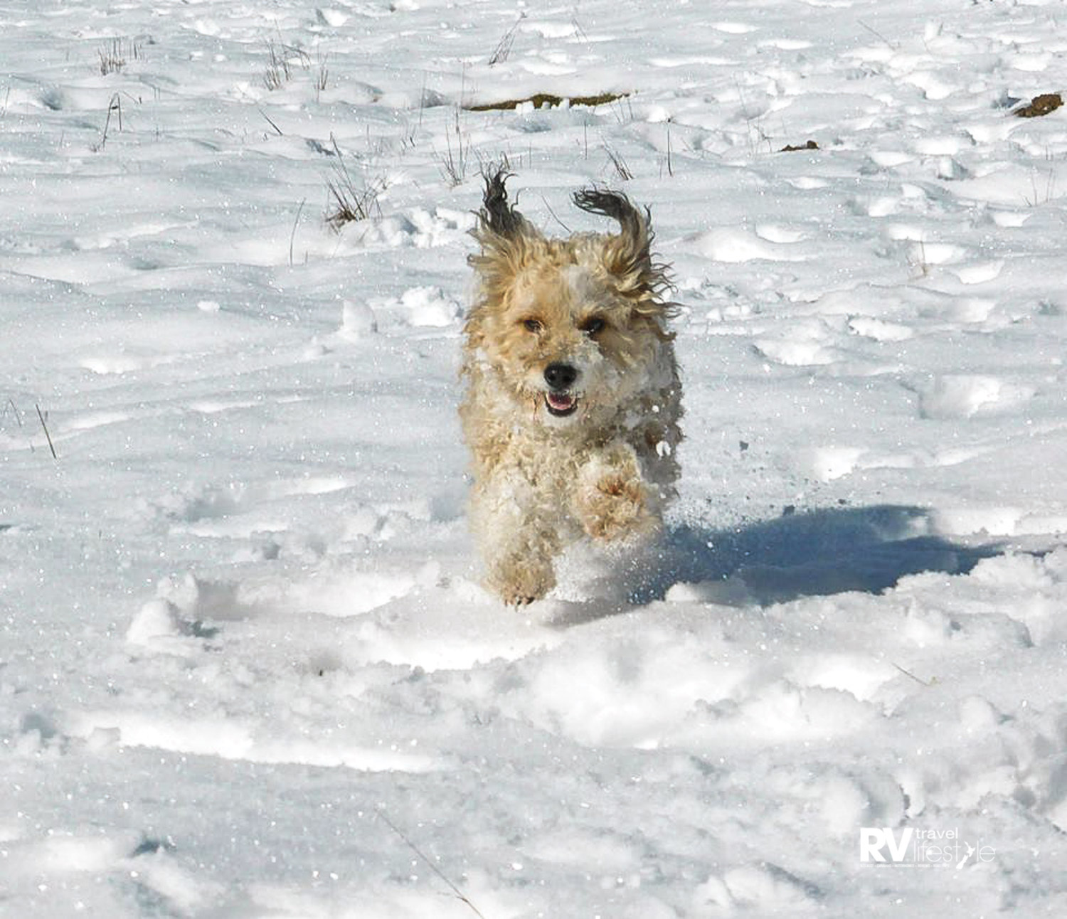Oakly feeling excited in the snow