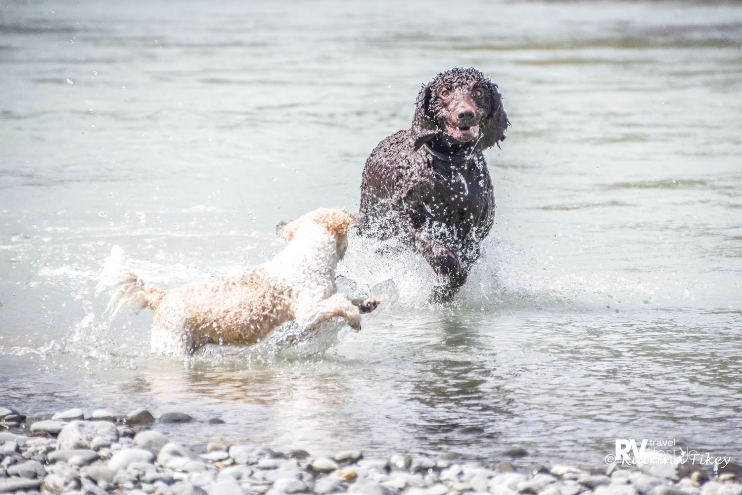 There's nothing like a play in the river to cool off
