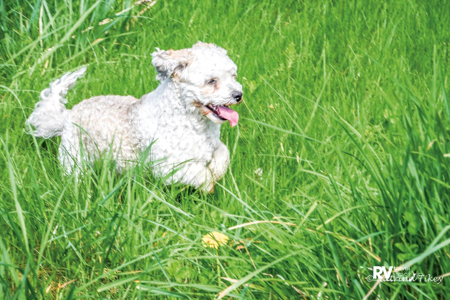 Happiness is…t frolicking in long grass