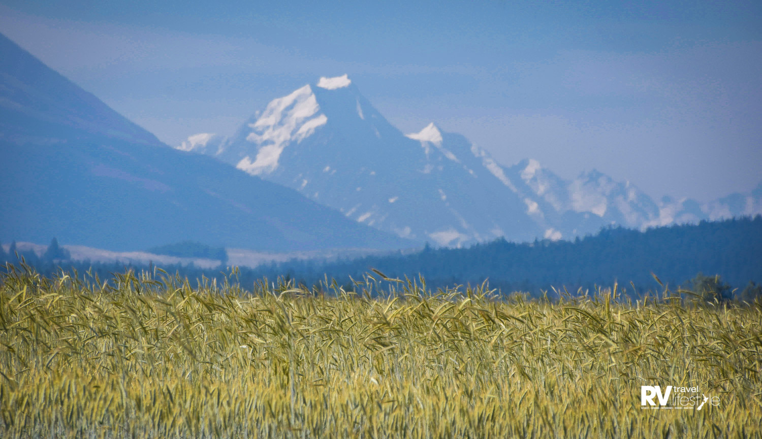 Golden fields and snow peaked mountains