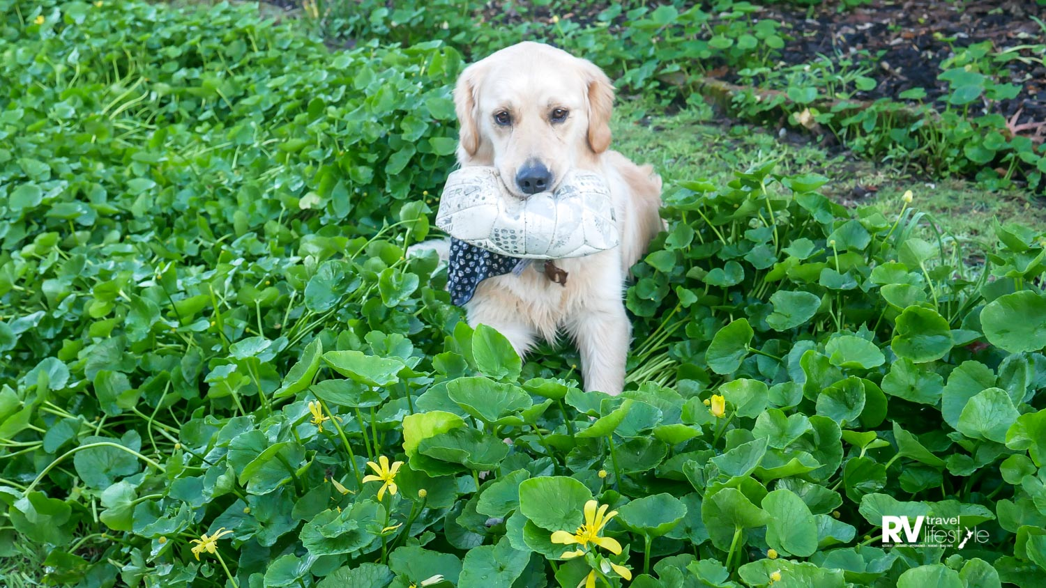 Jeffrey was a big bounding baby, and flattened the garden and ball