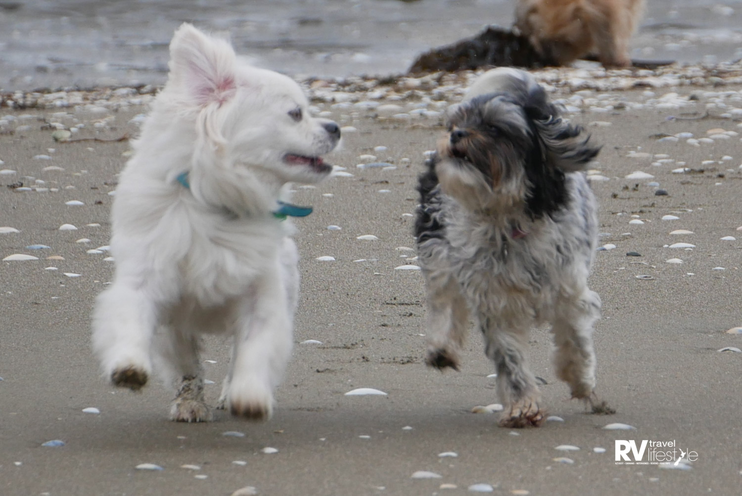 Caspar and Lox having a great time together on the beach