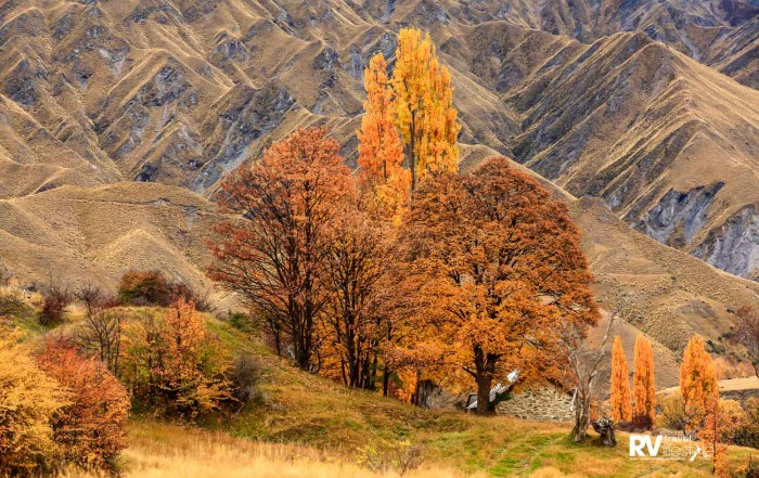 The historic gold-mining ghost town of Macetown, 15km from Arrowtown, Otago, New Zealand. Autumn turns the poplar trees to gold. Picture by Mike Langford