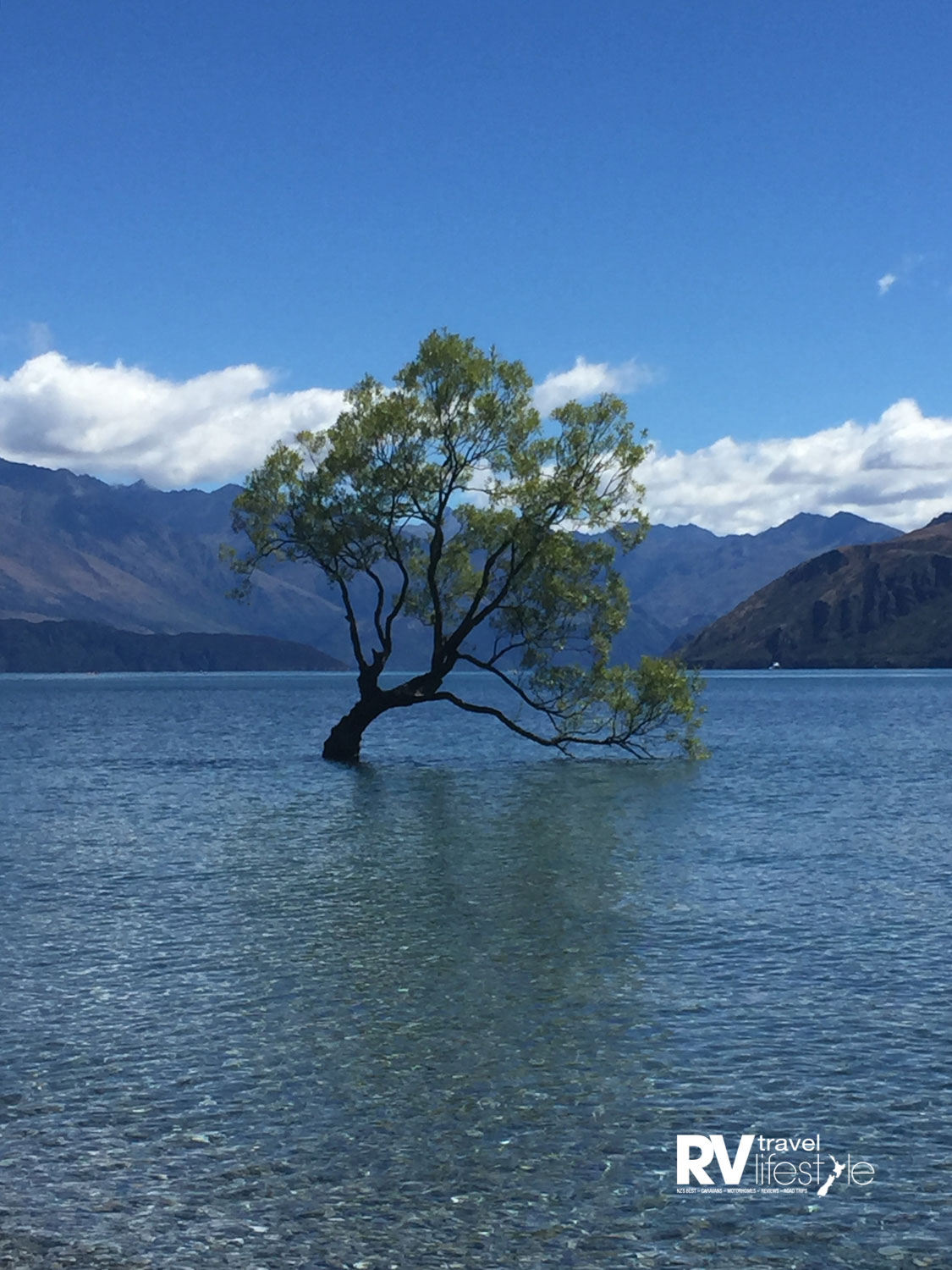 In spring, the famous Wanaka tree comes back to life