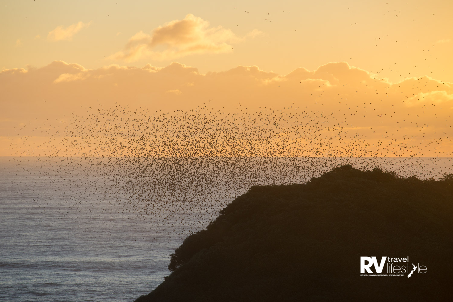 Starlings swarm over Motuotamatea (Snapper Rock)