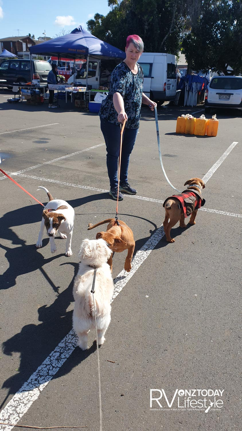 These guys were friendly pups at the Pukekohe market