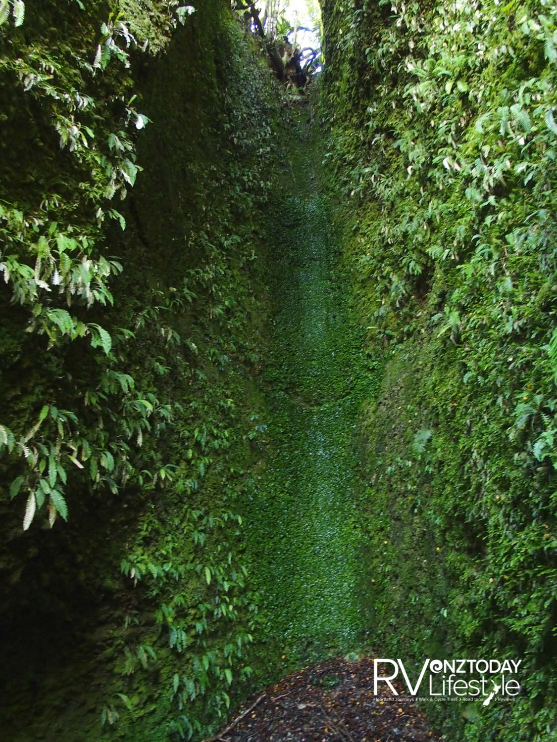 Ferns and moss on the tall, steep walls of 'the cathedral' – photo NZ Adventures