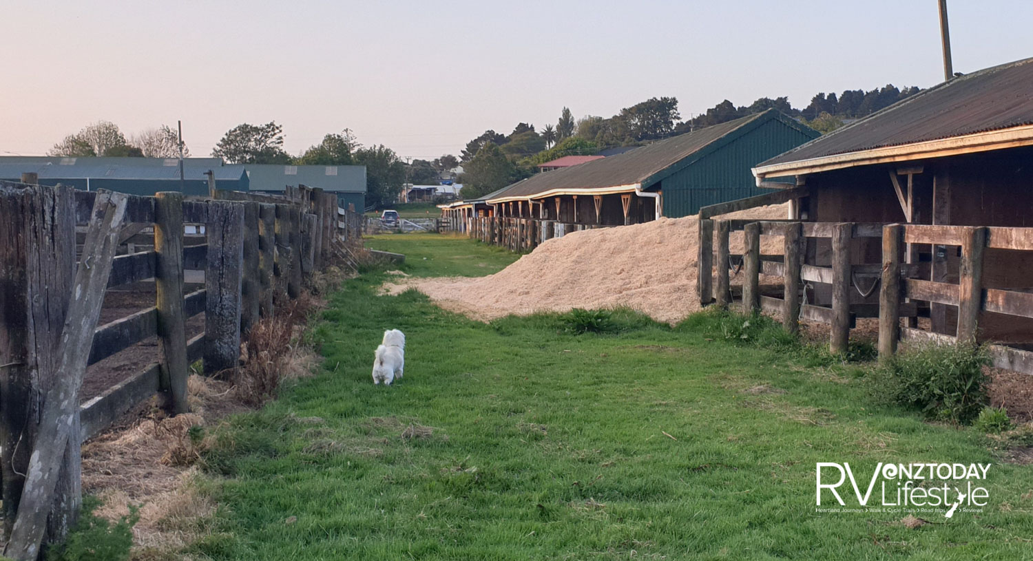 Looking for my rabbit mates at the Pukekohe A&P Showgrounds area - lots of motorhomes stay here overnight, I meet new friends there sometimes too