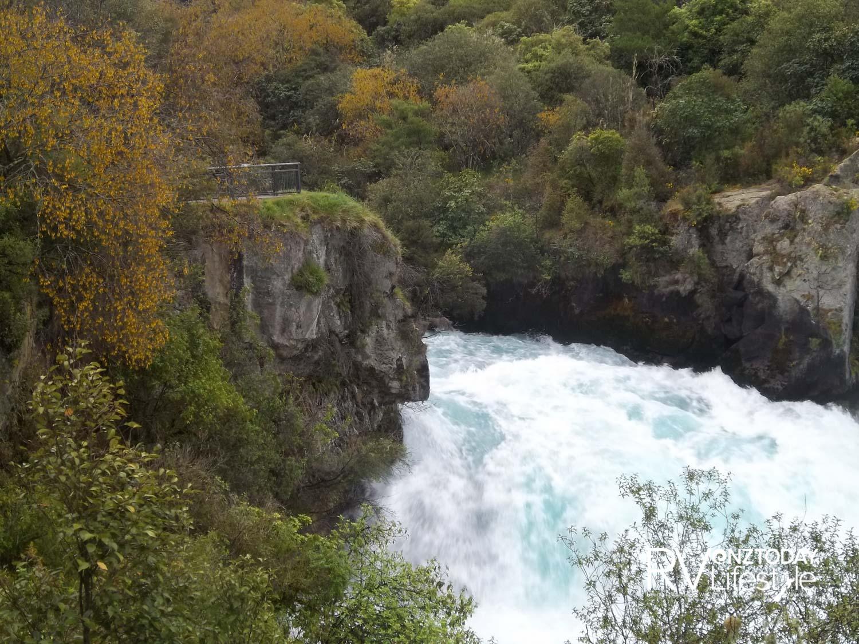 Kōwhai at Huka Falls