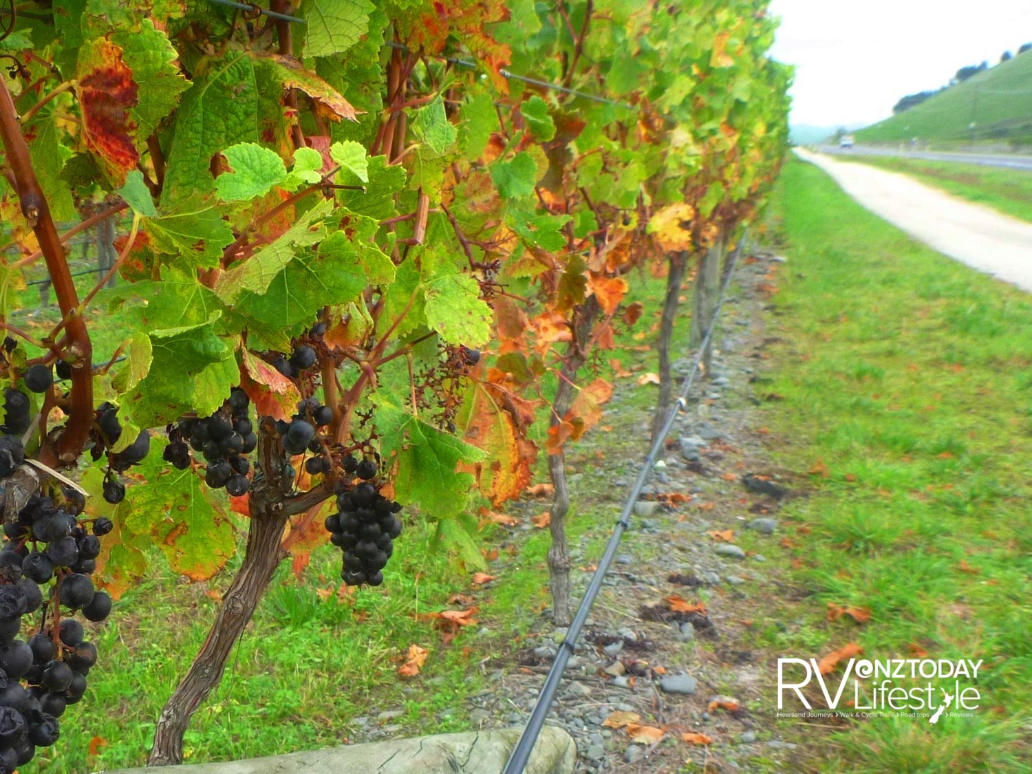 The Wineries Ride makes a glorious loop around the vineyards