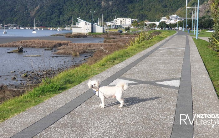 Interesting walkies in Whakatāne